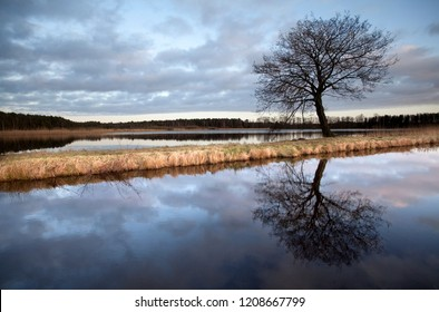 "leafless tree between two lakes of the ""Aschauteiche"" in the district Celle, Germany in the evening with vivid cloudy sky"
