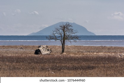 Leafless tree, Delta, BC, Canada in late winter framed by a hazy image of Lummi Peak on Lummi Island, Washington state, USA, across Boundary Bay. A huge piece of driftwood is near the tree.