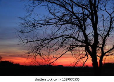 leafless tree in dusk on sunset sky background