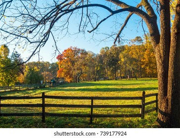 A leafless tree and farm fence frame this Autumn scene in Upper Freehold New Jersey.