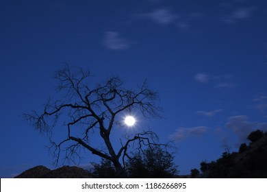 Leafless tree in the moonshine