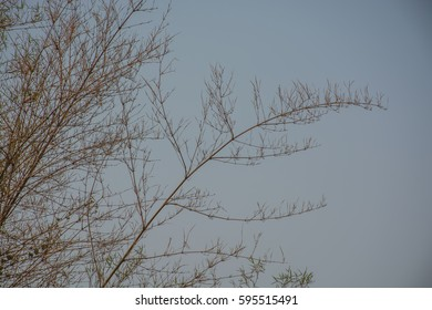 Leafless tree on blue sky background