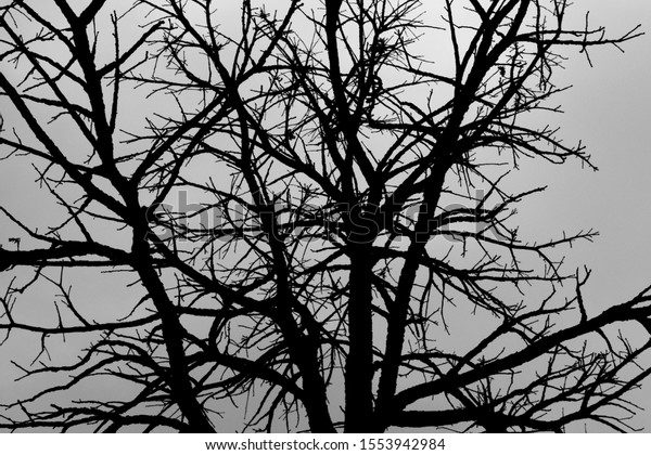 Leafless tree silhouette during winter