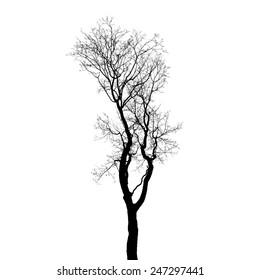 Leafless tree silhouette isolated on white background. Stylized photo