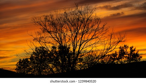 Leafless tree silhouetted against a dramatic evening sky