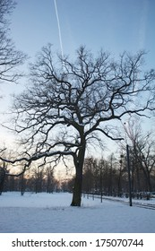 Leafless tree in the snowy landscape along the River Rhine