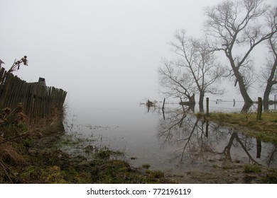 leafless tree standing on the bank of a misty autumn river on a cloudy sad day