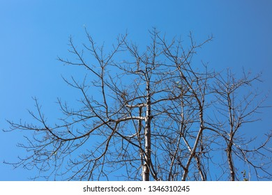 Leafless tree in summer