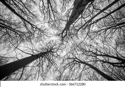 Leafless tree tops in the sky shot in black and white/ Tree tops
