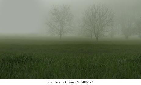 Leafless trees barely seen on misty grassy landscape