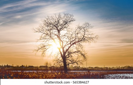 Leafless tree's branches on dramatic sky background