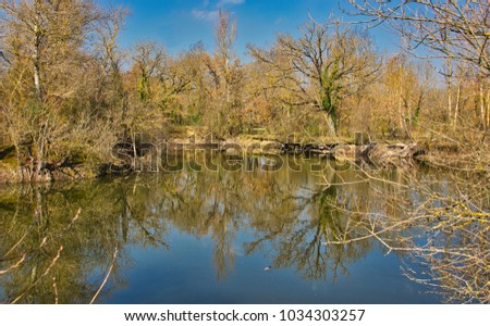Leafless trees reflecting in a lack