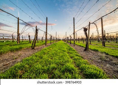leafless vineyards clinging to supports made of wooden planks, concrete poles and steel cables according to modern agriculture