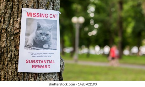Leaflet with information about the missing cat hanging on a tree in the park