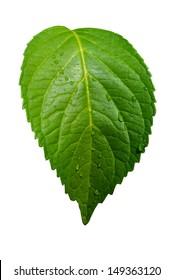 leaf,nature