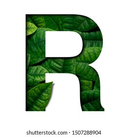 Leafs font R made of Real alive leafs with Precious paper cut shape of font. Leafs font.