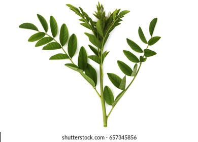 Leafs of Liquorice (Glycyrrhiza glabra). The root is alterative, antispasmodic, demulcent, diuretic, emollient, expectorant, laxative, moderately pectoral and tonic.