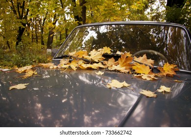 leafs on the car