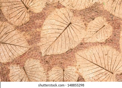 Leafs on cement texture background