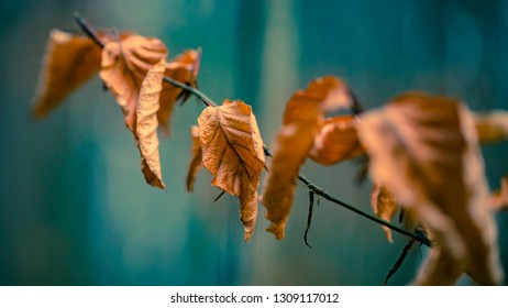 Leafs in a row with a soft blue background