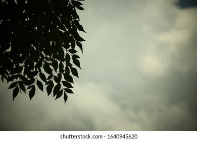 Leafy branch silhouetted against grey cloudy sky