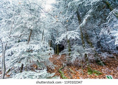 leafy forest with snow