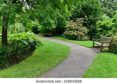 Leafy Green Garden Path
