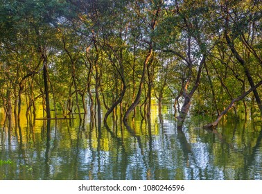 A leafy mangrove forest on the coast of east Thailand. Tree reflect in the water.