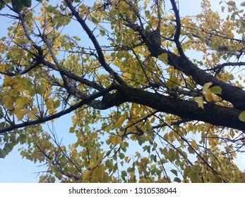 Leafy tree on spring