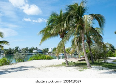 Leaning palm trees with hammocks in Sandyport tourist village, the district in Nassau city (Bahamas).