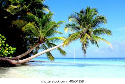 leaning palm tree images stock photos vectors shutterstock
