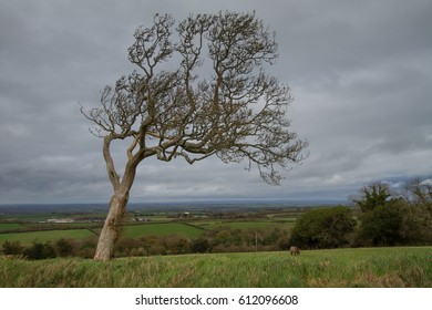 Leaning tree showing where the prevailing wind is.