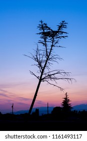 Leaning tree silhouette during hazy summer sunset