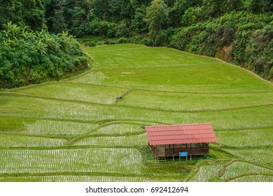 Learning center on rice farm in the hill at Mae la noi, Mae hong son, Thailand in rain season 2017