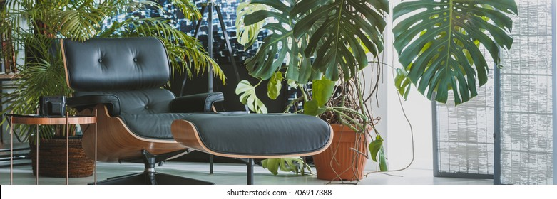 Leather chaise lounge next to coffee table in dark  living room with exotic big plants