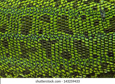 Leather green lizards closeup