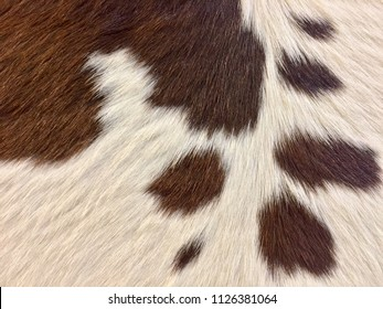 Leather hairs with a strange and beautiful style.  Patterns of cowhide. Patterns of beautiful brown and white fur.