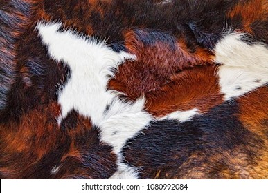 Leather lying on the field, cowhide skins, animal abuse