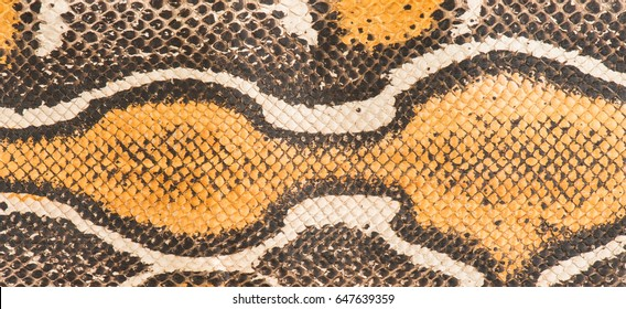 Leather made from a red tail boa snake skin