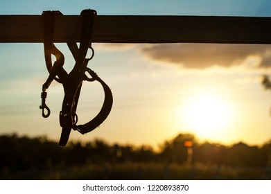 Leather plaited nylon halter on the fence in the rays of the setting sun. Horse theme