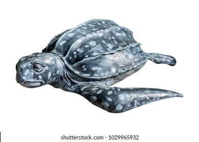 Leatherback turtle (Dermochelys coriacea) statue, the turtle statue mold from the mortar isolated on white background