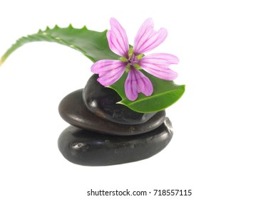 leaves of aloe with stones and flower  on white background