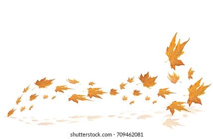 leaves autumn background wind yellow color plane tree
