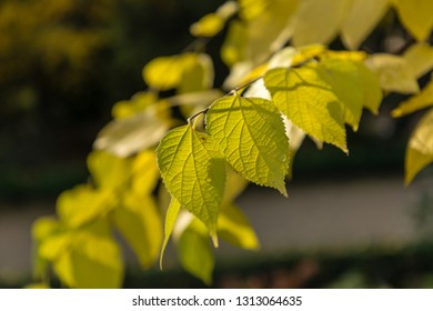 leaves with autumn colors