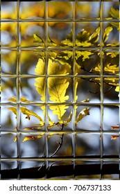 leaves in autumn through window panes