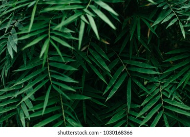 leaves background. nature and foliage background concept