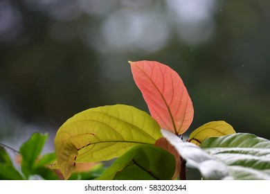 Leaves with backlight from sunlight and natural soft background for copyspace. (Selective focusing)