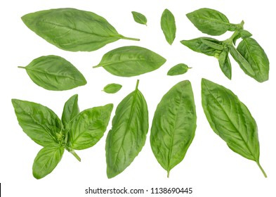 Leaves of Basil isolated on white, top view.