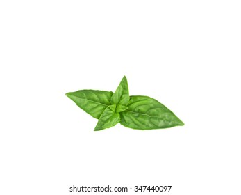 Leaves of basil isolated on white background
