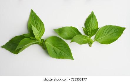 The leaves of basilic on the white flat. Macro lens.